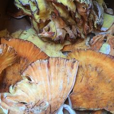 Chicken Of The Woods Mushrooms :: Search by flavors, find similar varieties and discover new uses for ingredients @ preppings.com