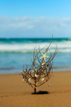 The beach, a starfish and Christmas...how can you go wrong? A beach Charlie Brown Christmas tree. Cute