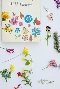 wild flowers book-- collect and press flowers while trailhiking or around your campsite. Love Flowers, Fresh Flowers, Wild Flowers, Beautiful Flowers, Nice Flower, April Showers, Botanical Illustration, Illustrations, Pink And Green