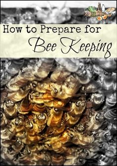 How to prepare for bee keeping