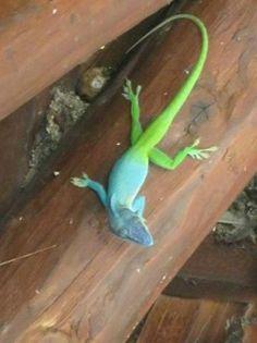 Melia Cayo Santa Maria: Friendly little critters