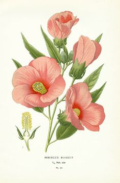 These botanicals would be pretty printed and transferred onto canvas pillows for the garden room--jc