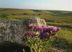 Image result for Kansas Flint Hills Flowers