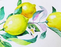 "Check out new work on my @Behance portfolio: ""Watercolors Lemons for box scented candles"" http://on.be.net/1QQCOg3"