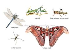 examples of insects [1] image