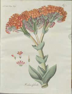 http://bibliodyssey.blogspot.com/2013/09/the-practical-garden.html