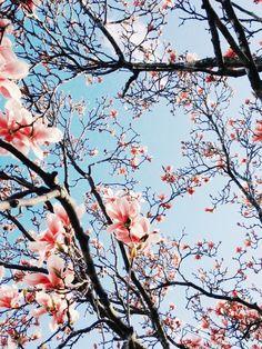 Magnolias.   Hello Emilie   VSCO Grid