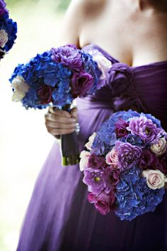 Blue hydrangeas with dark purple
