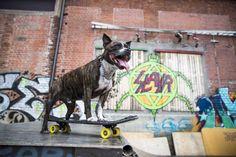 Nyt on asennetta! Rambo on Suomen ainoa skeittaava koira – katso huikea tyylinäyte