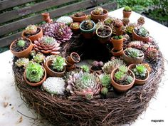 Unique Sempervivum wreath with little pots
