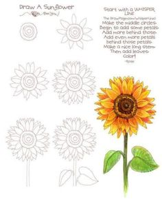 New flowers drawing sunflower art lessons ideas Simple Flower Drawing, Flower Art Drawing, Flower Drawing Tutorials, Sunflower Drawing, Sunflower Art, Painting & Drawing, Sun Drawing, Simple Flowers To Draw, Flower Drawings