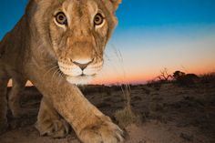Curiosity and the cat Photograph by Hannes Lochner -- National Geographic Your Shot