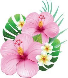EPS Vectors of Arrangement from hibiscus flowers - Search Clip Art, Illustration, Drawings and Clipart Vector Graphics Images Hawaiian Flowers, Hibiscus Flowers, Tropical Flowers, Hibiscus Clip Art, Hibiscus Flower Drawing, Motif Tropical, Hibiscus Tattoo, Hibiscus Plant, Paper Flowers