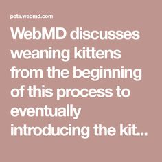 WebMD discusses weaning kittens from the beginning of this process to eventually introducing the kitten to solid food.