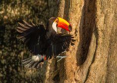 1wonderfulworld:  Amazing birds world.
