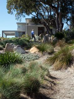Bokor - Bundeena House - Planting Design by Mallee Design Ali- I like the winding path down around the plants Coastal Gardens, Beach Gardens, Outdoor Gardens, Australian Garden Design, Australian Native Garden, Bush Garden, Dry Garden, Low Maintenance Garden, Garden Architecture