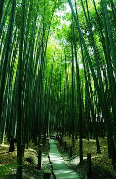 報国寺 Houkoku-ji Temple, Kamakura, Japan via αcafe | My Sony Club | ソニー #緑 #Green…