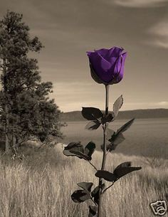 Flowers Black And White Photography Nature Color Splash 49 New Ideas Purple Love, All Things Purple, Shades Of Purple, Purple Flowers, Purple Stuff, The Color Purple, Purple Sky, Lavender Color, Belle Image Nature