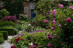 """pagewoman: """" Sissinghurst Roses 🌿 ❀ 🌾 """""""