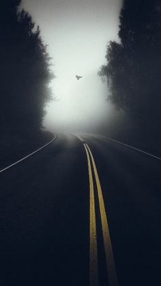 Nature Mist Road Morning iPhone Wallpaper - iPhone Wallpapers