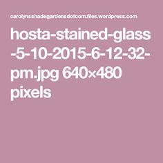 hosta-stained-glass-5-10-2015-6-12-32-pm.jpg 640×480 pixels