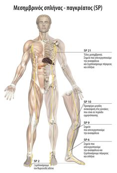 Body Therapy, Acupuncture, Human Body, Kai, Yoga, Health, Fitness, Chakras, Tips