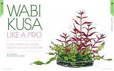 Wabi Kusa Like a Pro on Behance