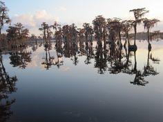 A Georgia swamp at sunset.