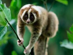 Amchang Wildlife Sanctuary - in Assam, India