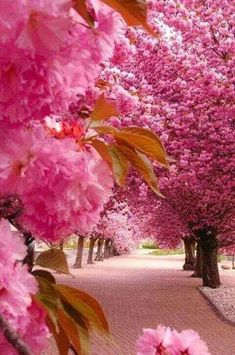 Pink trees....Gorgeous