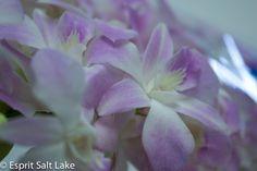 Dendrobium pink lavendar for wedding flowers