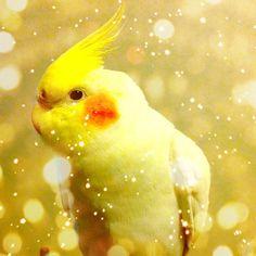 Go cameranapp your parrott! #bird #cameran - @sumog- #cameranapp