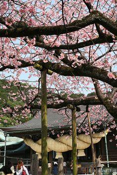 Miyajidake Shrine, Fukutsu city, Fukuoka, Japan.