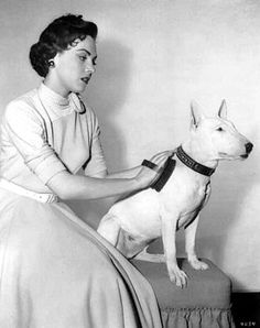 Another Bull Terrier photographed in the 1950s (judging by her outfit).