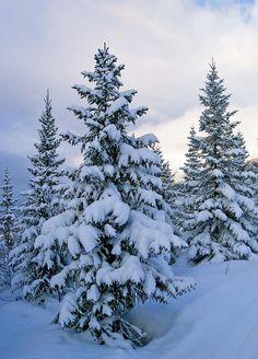 Vinterskog Snow, Photos, Photography, Outdoor, Pictures, Outdoors, Photograph, Photo Shoot, Outdoor Games