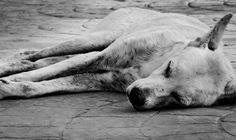 A stray dog lay hungry on the streets of Morocoy Venezuela