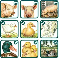 abeceda-pexetrio - Hľadať Googlom File Folder Activities, Forest Theme, Animal Habitats, Jungle Party, Bible Crafts, Kids Gifts, Montessori, Farm Animals, Card Games
