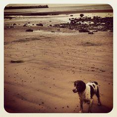 Maryport Promenade , Solway Coast West Cumbria ft Ben the springer :)