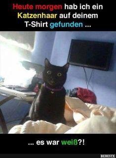 Heute morgen hab ich ein Katzenhaar auf deinem T-Shirt gefunden..