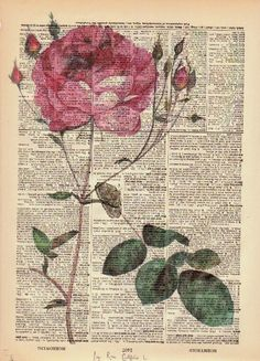 Rose Dictionary Print