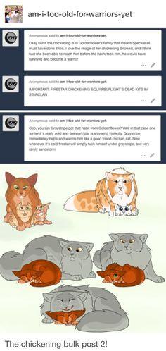 #catsdiydrawing Warrior Cats Funny, Warrior Cats Comics, Warrior Cat Memes, Warrior Cats Series, Warrior Cats Books, Warrior Cat Drawings, Warrior Cats Fan Art, Cat Comics, Warriors Memes