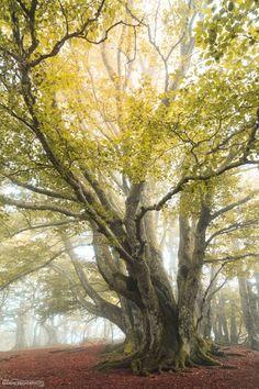 Arbre - Puy des Goules - Auvergne - France by Maxence Boyer Photo / 500px