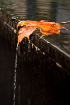 """Fall"" by Sharon Drummond on Flickr - Worldwide Photowalk Day 2011, Windsor, Ontario, Canada"