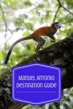 Essential Tips on Visiting Manuel Antonio, Costa Rica: When to Go, Getting There, Restaurants & Activities. http://www.twoweeksincostarica.com/manuel-antonio-trip-planning/ #CostaRica #ManuelAntonio #ecotourism