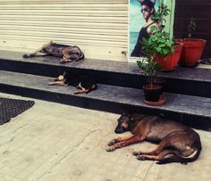 The 3 Amigos, a family of street dog napping on a hot indian day.. they got styles B)