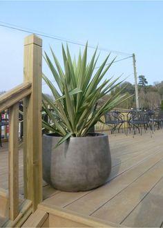 rondo bowl planter (IOTA)