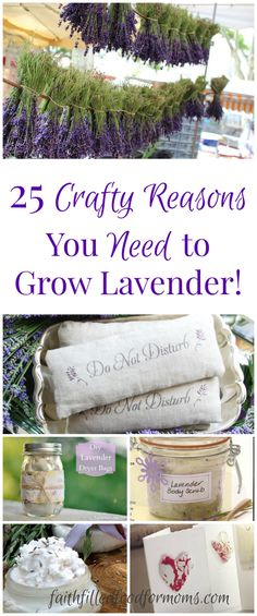Gardening 25 crafty reasons you need to grow lavender! A beautiful round up of some of the most heavenly lavender crafts! If you don't grow lavender.so easy and so versitile! - 25 creative and crafty reasons you need to grow lavender! Lavender Crafts, Lavender Recipes, Lavender Decor, Growing Lavender, Growing Herbs, Uses For Lavender Plant, Container Gardening, Gardening Tips, Organic Gardening