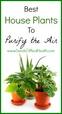 Best air-filtering houseplants, according to NASA | Explore https://CavemenWorld.com Boards at https://pinterest.com/cavemenworld/