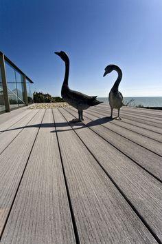 VertiGrain 2 Grey decking boards from TimberTech. Grey composite decking for contemporary gardens – order a FREE sample now! Grey Gardens, Composite Decking, Modern Buildings, Coastal Living, Composition, Terrace Ideas, Ducks, Nature, Sea