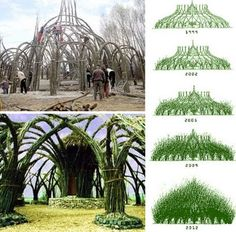 Building with live willow trees, I would love to try this.. but gosh it would take forever!